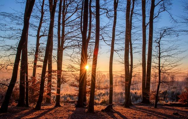 stromy v zimním lese, prosvítající slunce